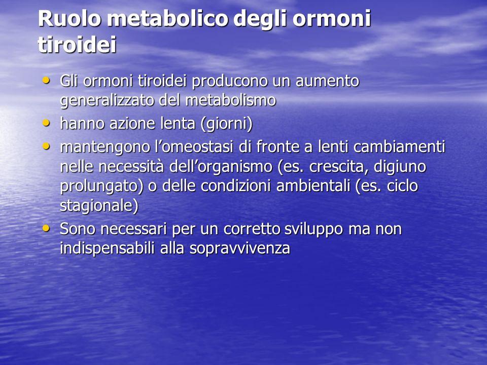 Ruolo metabolico degli ormoni tiroidei