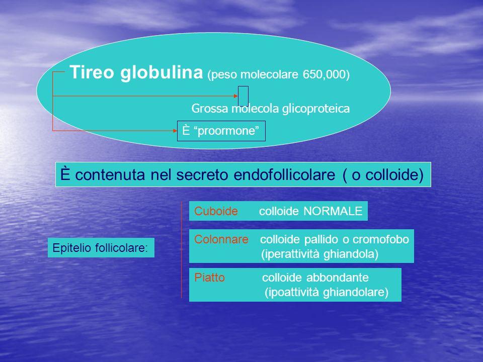 Tireo globulina (peso molecolare 650,000)