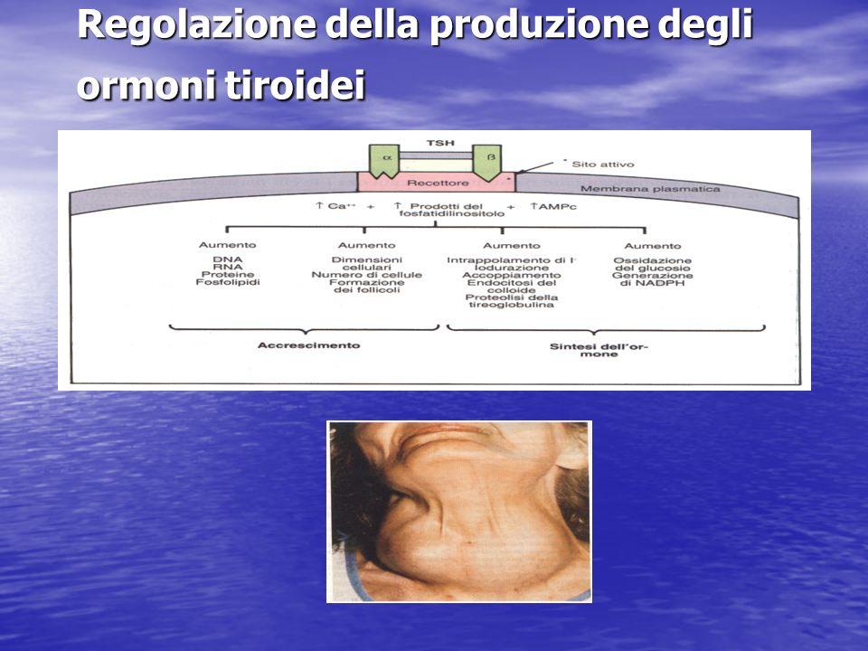 Regolazione della produzione degli ormoni tiroidei