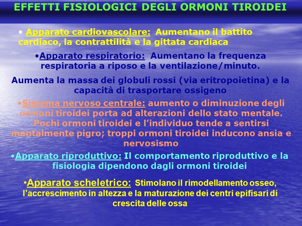 EFFETTI FISIOLOGICI DEGLI ORMONI TIROIDEI