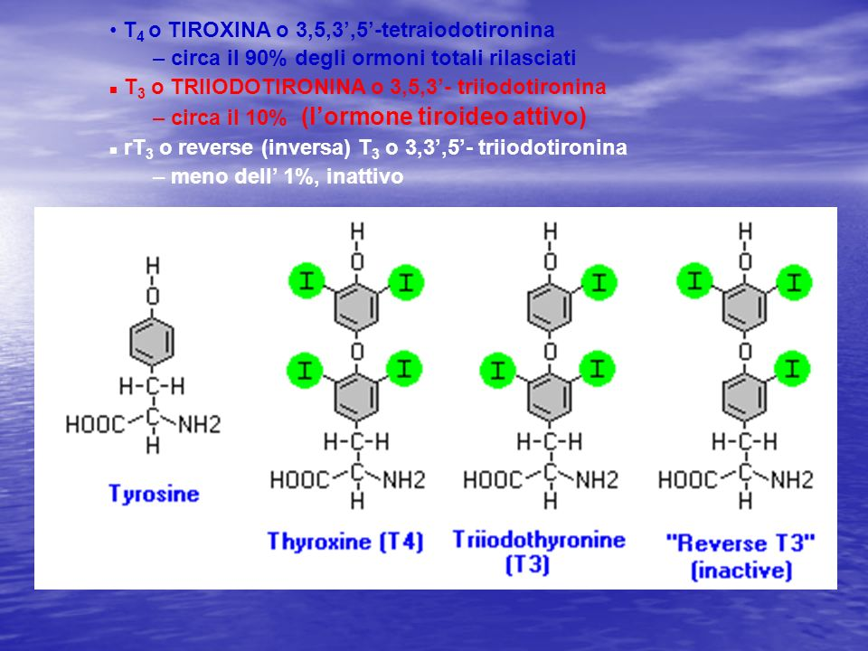 T4 o TIROXINA o 3,5,3',5'-tetraiodotironina
