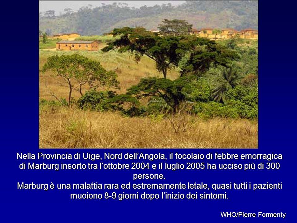 Nella Provincia di Uige, Nord dell'Angola, il focolaio di febbre emorragica di Marburg insorto tra l'ottobre 2004 e il luglio 2005 ha ucciso più di 300 persone.
