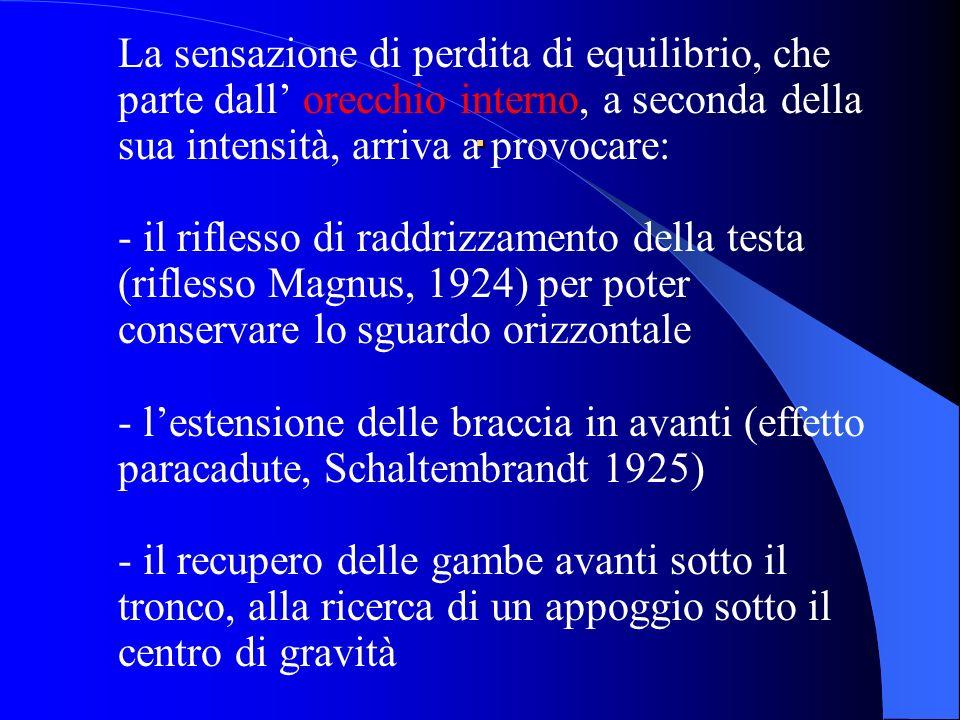 La sensazione di perdita di equilibrio, che parte dall' orecchio interno, a seconda della sua intensità, arriva a provocare: - il riflesso di raddrizzamento della testa (riflesso Magnus, 1924) per poter conservare lo sguardo orizzontale - l'estensione delle braccia in avanti (effetto paracadute, Schaltembrandt 1925) - il recupero delle gambe avanti sotto il tronco, alla ricerca di un appoggio sotto il centro di gravità