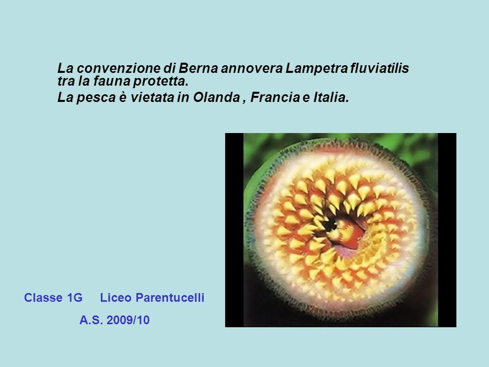 Classe 1G Liceo Parentucelli