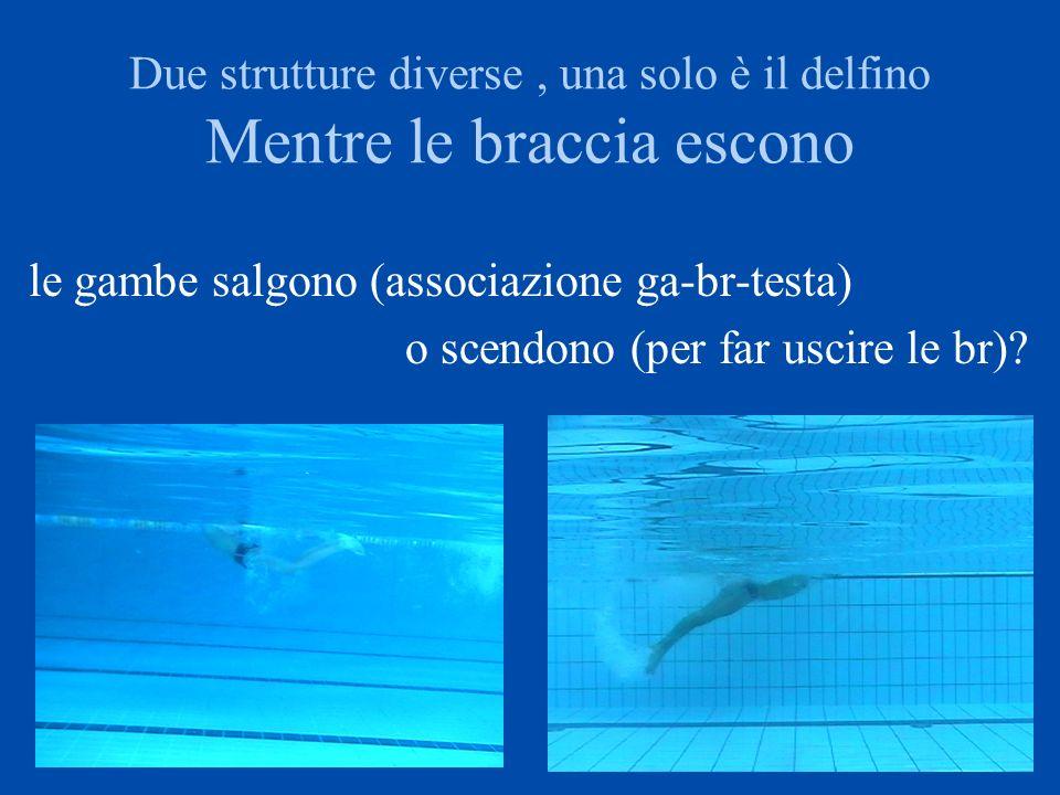 Due strutture diverse , una solo è il delfino Mentre le braccia escono