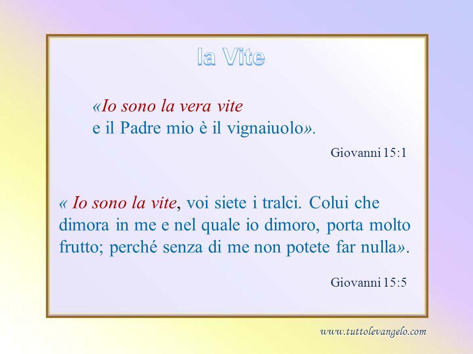 «Io sono la vera vite e il Padre mio è il vignaiuolo».