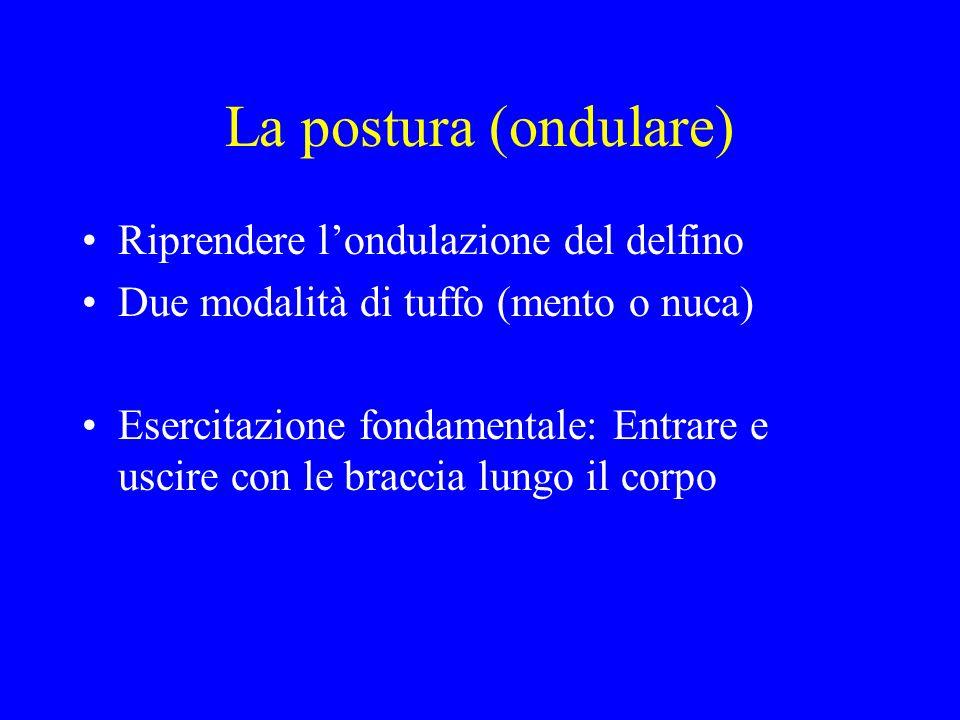 La postura (ondulare) Riprendere l'ondulazione del delfino