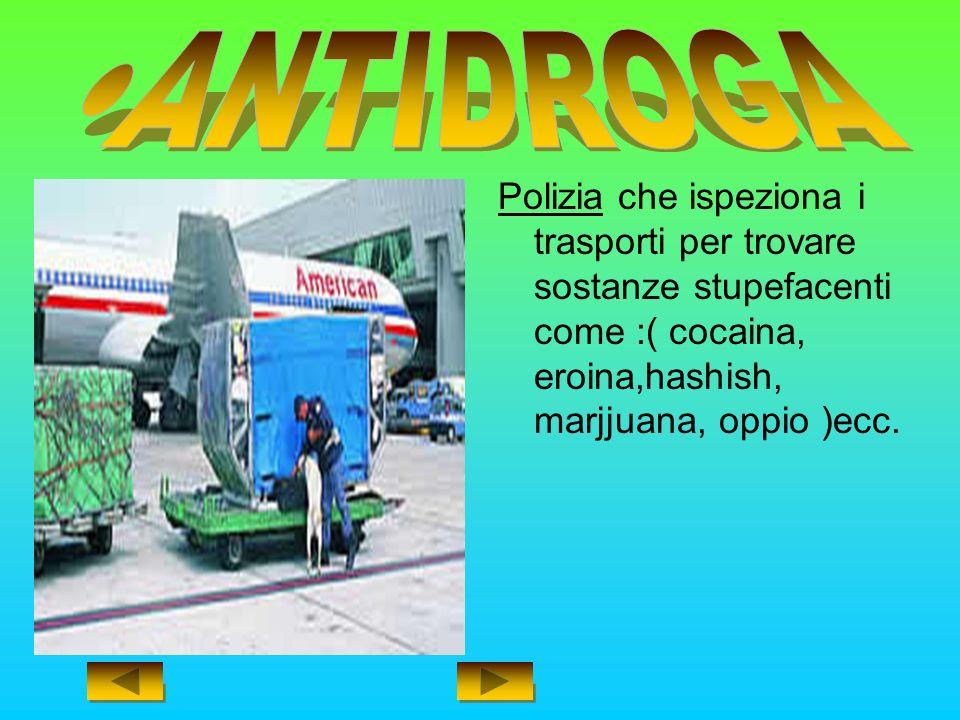 ANTIDROGA Polizia che ispeziona i trasporti per trovare sostanze stupefacenti come :( cocaina, eroina,hashish, marjjuana, oppio )ecc.