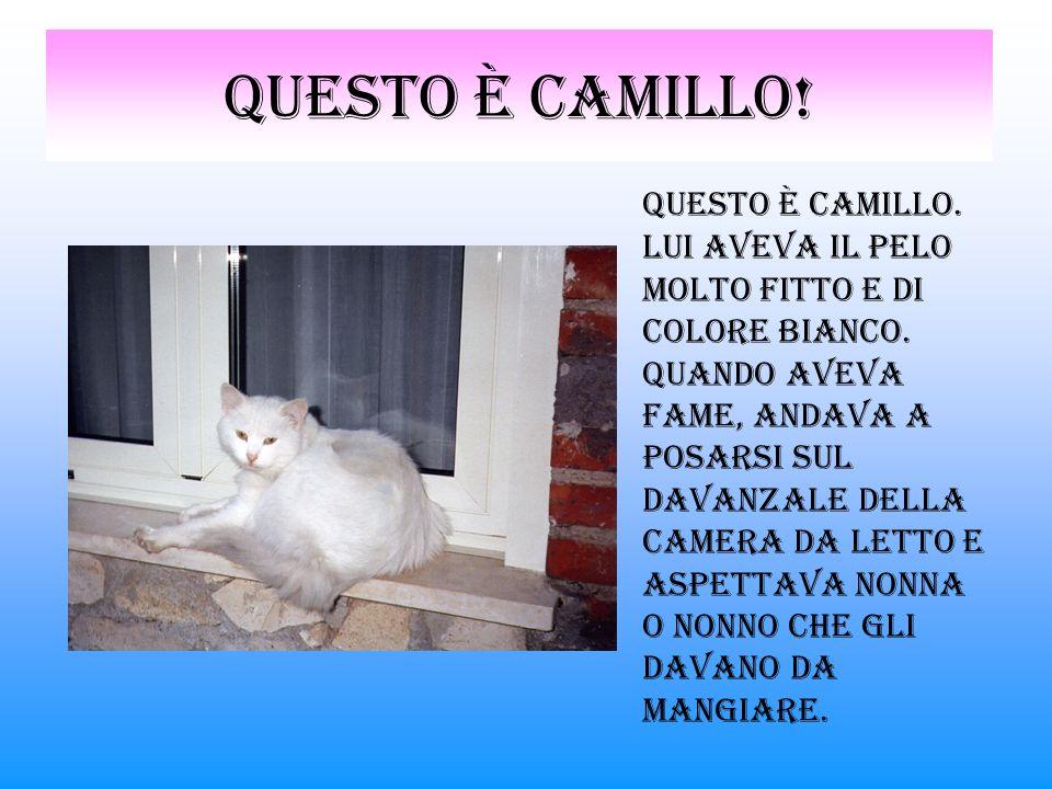 Questo è Camillo!