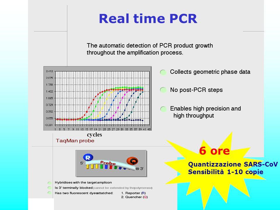 Real time PCR 6 ore cycles Quantizzazione SARS-CoV