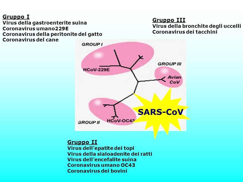 SARS-CoV Gruppo I Gruppo III Gruppo II