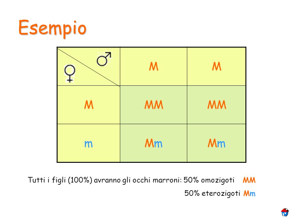 EsempioM.MM. m. Mm. Tutti i figli (100%) avranno gli occhi marroni: 50% omozigoti MM.