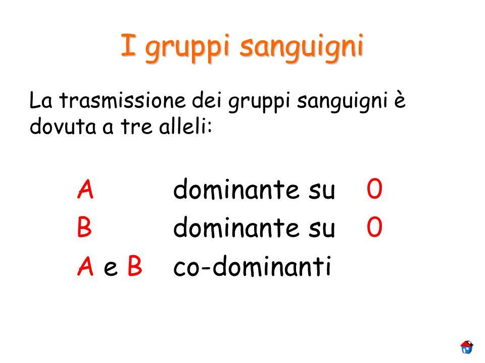 I gruppi sanguigni A dominante su 0 B dominante su 0