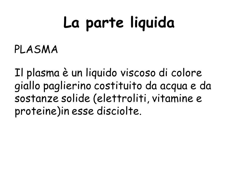 La parte liquida PLASMA