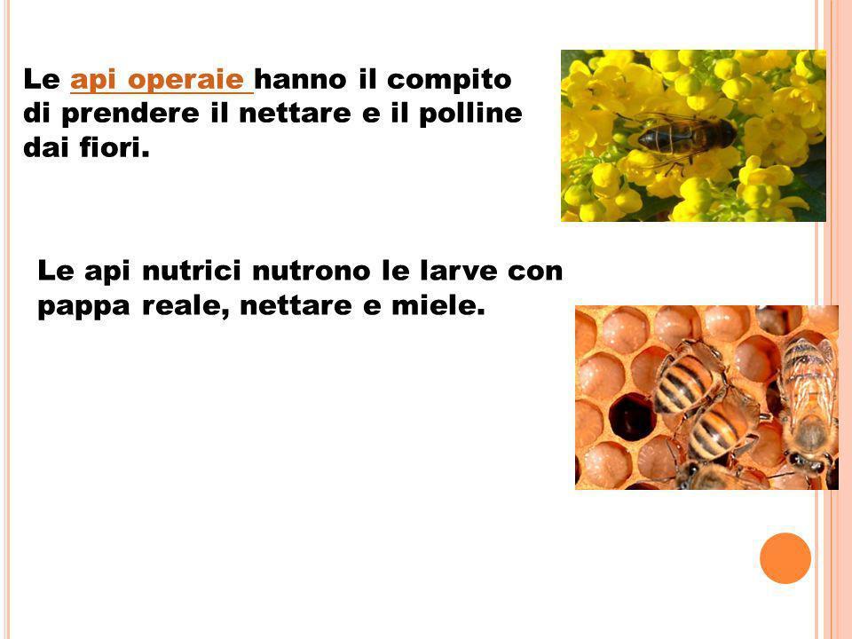 Le api operaie hanno il compito