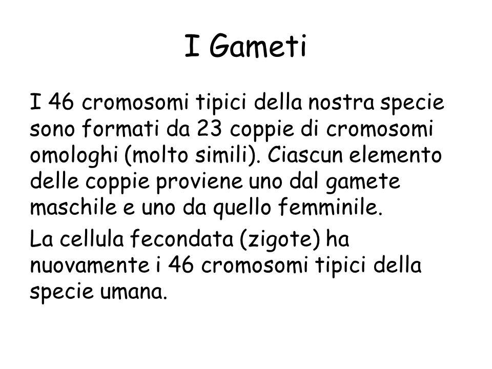 I Gameti