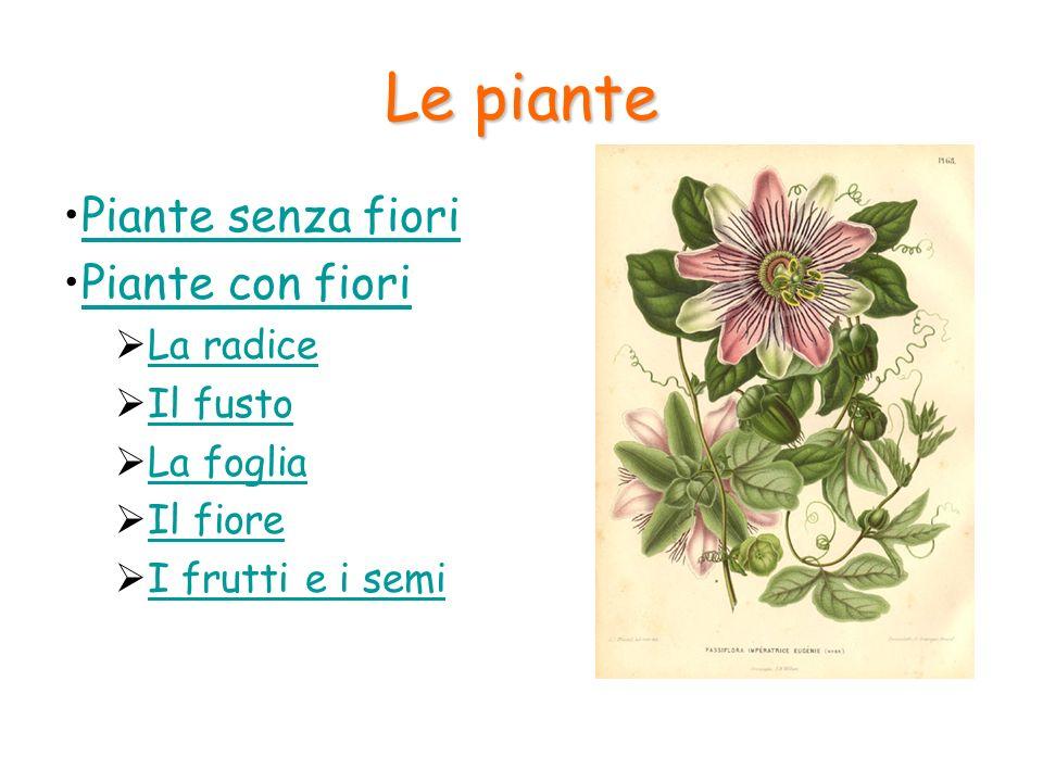 Le piante Piante senza fiori Piante con fiori La radice Il fusto