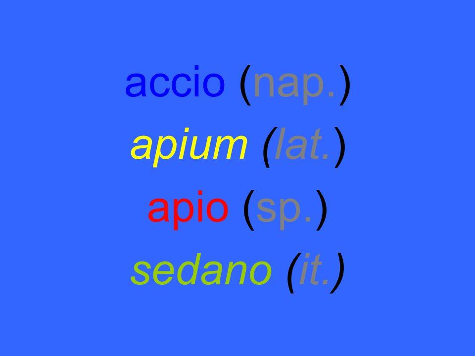 accio (nap.) apium (lat.) apio (sp.) sedano (it.)