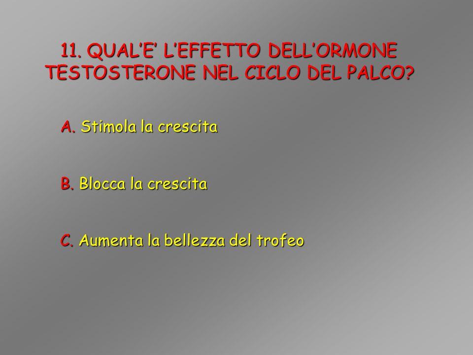 11. QUAL'E' L'EFFETTO DELL'ORMONE TESTOSTERONE NEL CICLO DEL PALCO
