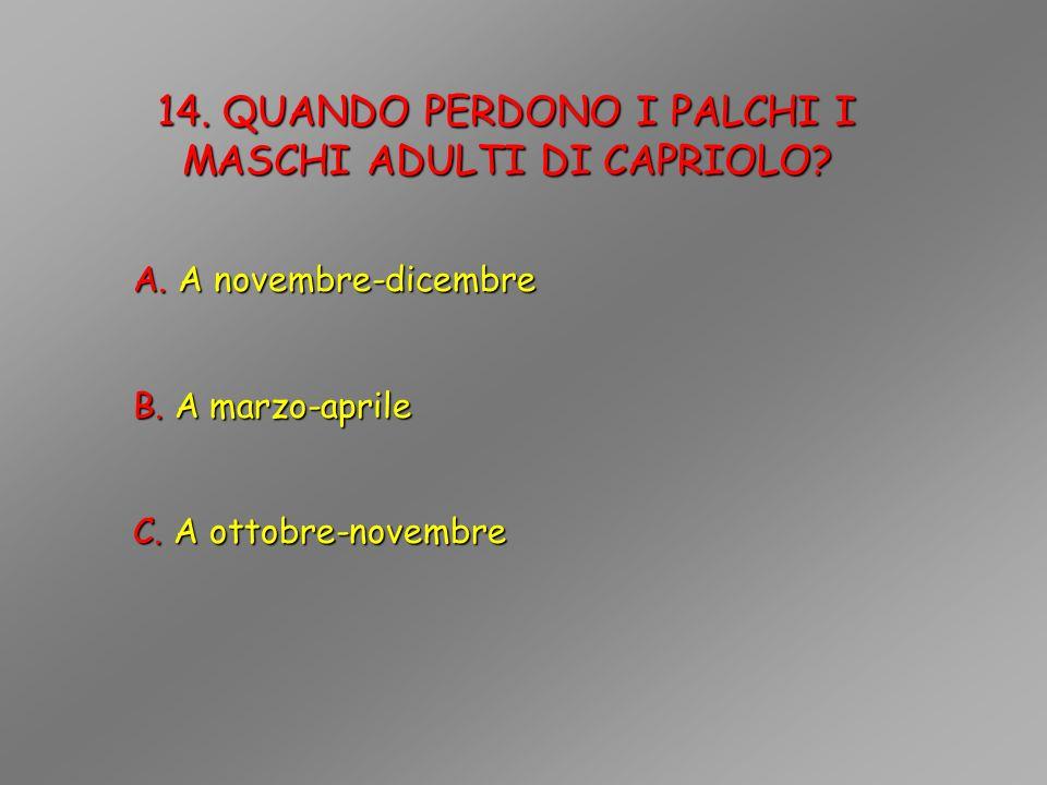 14. QUANDO PERDONO I PALCHI I MASCHI ADULTI DI CAPRIOLO