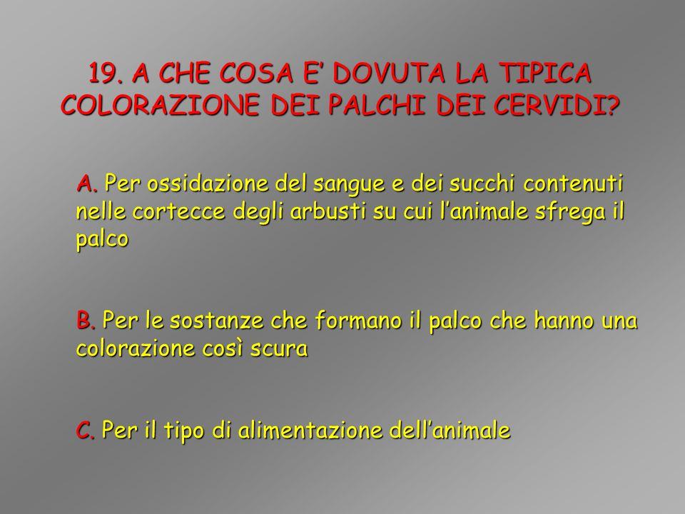 19. A CHE COSA E' DOVUTA LA TIPICA COLORAZIONE DEI PALCHI DEI CERVIDI