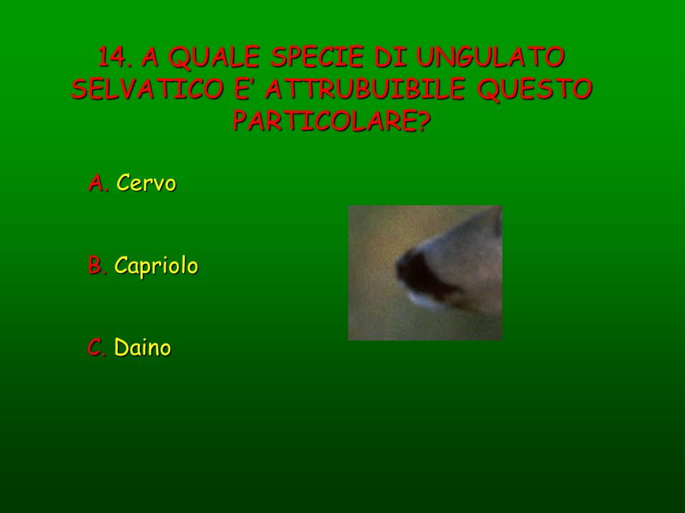 14. A QUALE SPECIE DI UNGULATO SELVATICO E' ATTRUBUIBILE QUESTO PARTICOLARE