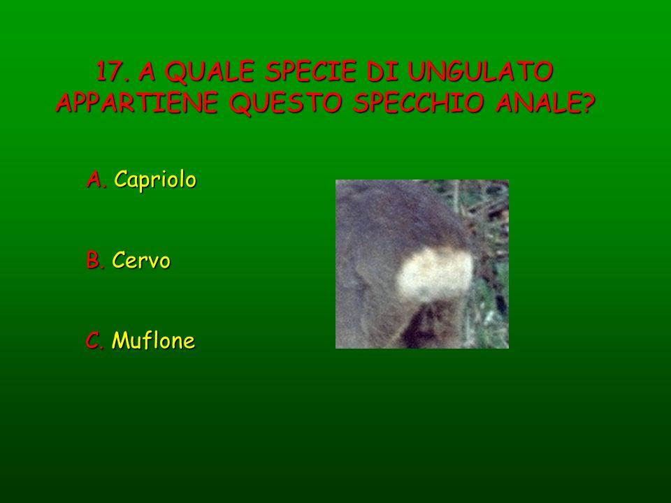 17. A QUALE SPECIE DI UNGULATO APPARTIENE QUESTO SPECCHIO ANALE