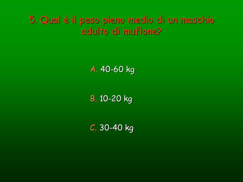 5. Qual è il peso pieno medio di un maschio adulto di muflone