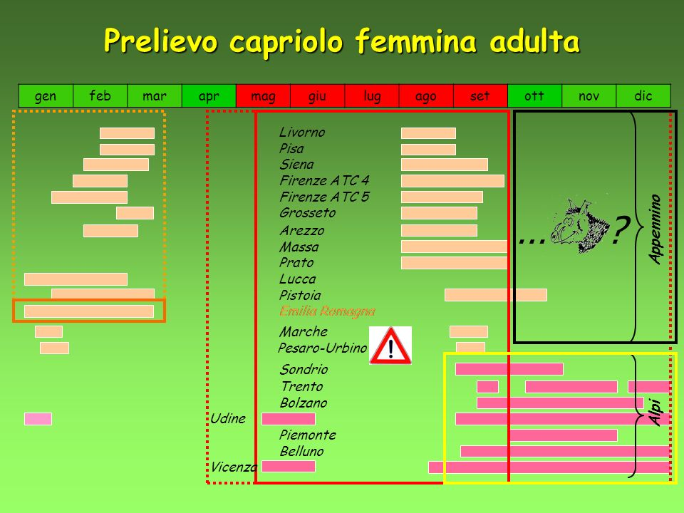 Prelievo capriolo femmina adulta