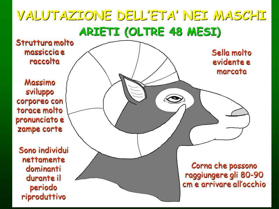 VALUTAZIONE DELL'ETA' NEI MASCHI
