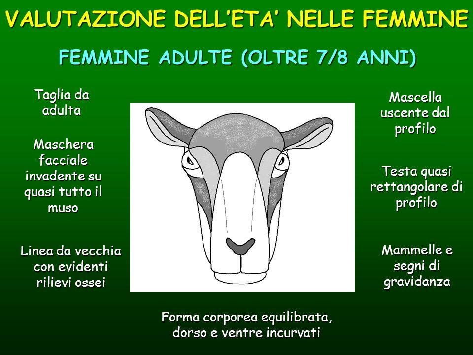 VALUTAZIONE DELL'ETA' NELLE FEMMINE