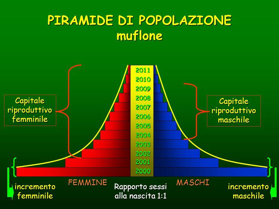 PIRAMIDE DI POPOLAZIONE muflone