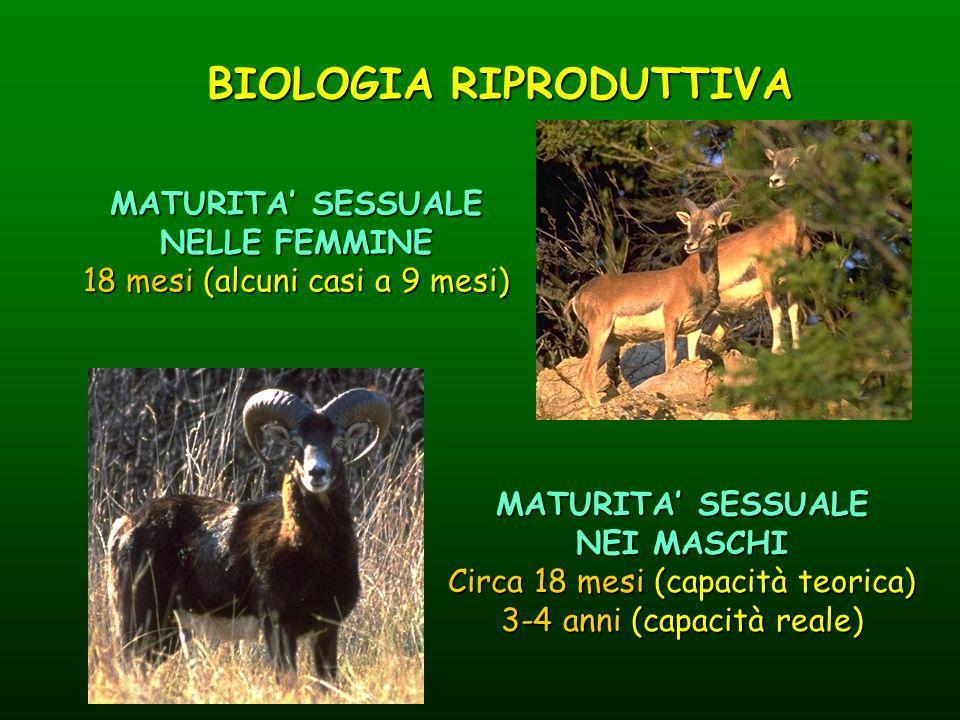 BIOLOGIA RIPRODUTTIVA