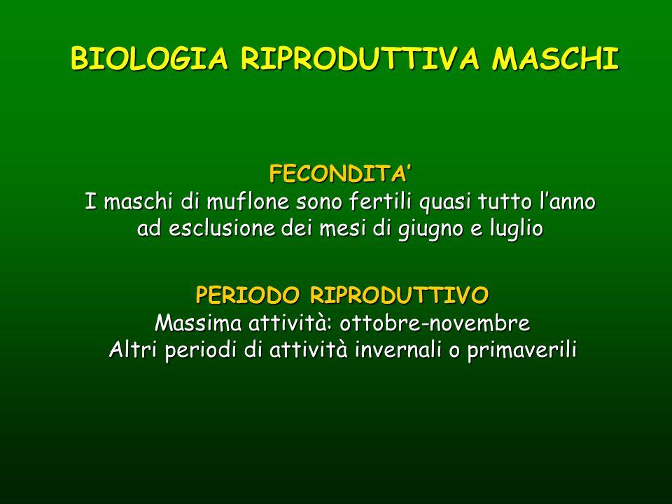 BIOLOGIA RIPRODUTTIVA MASCHI