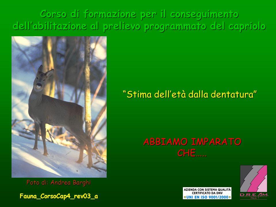 Fauna_CorsoCap4_rev03_a