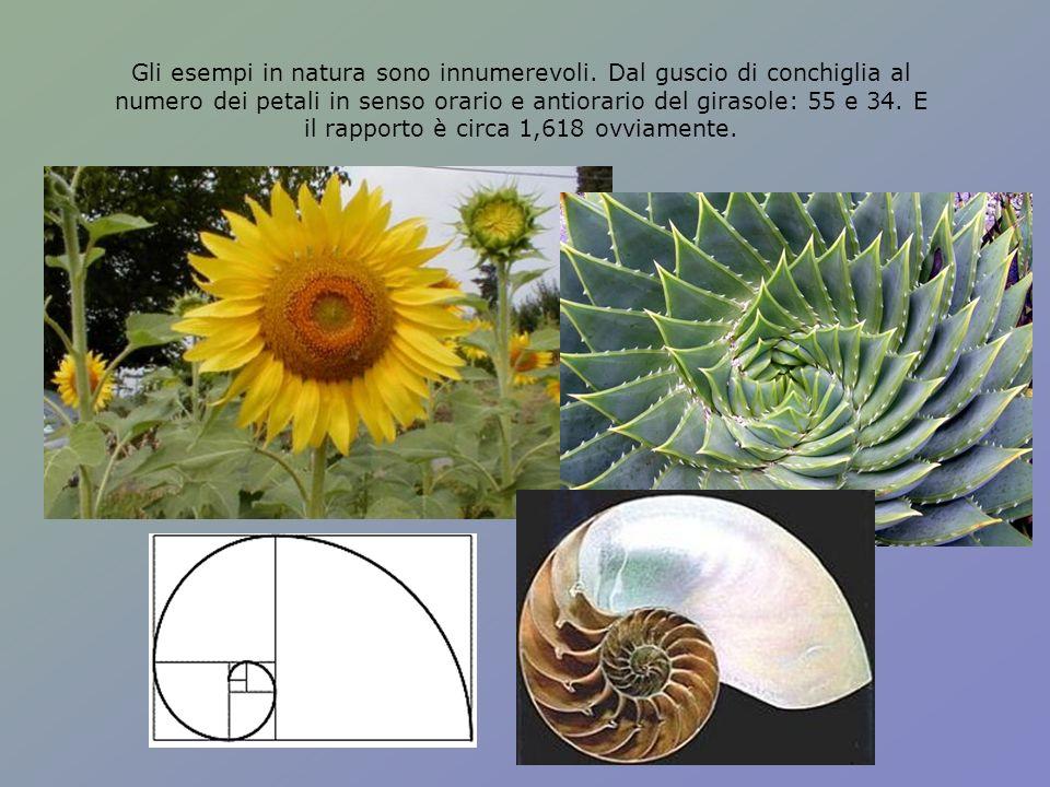 Gli esempi in natura sono innumerevoli