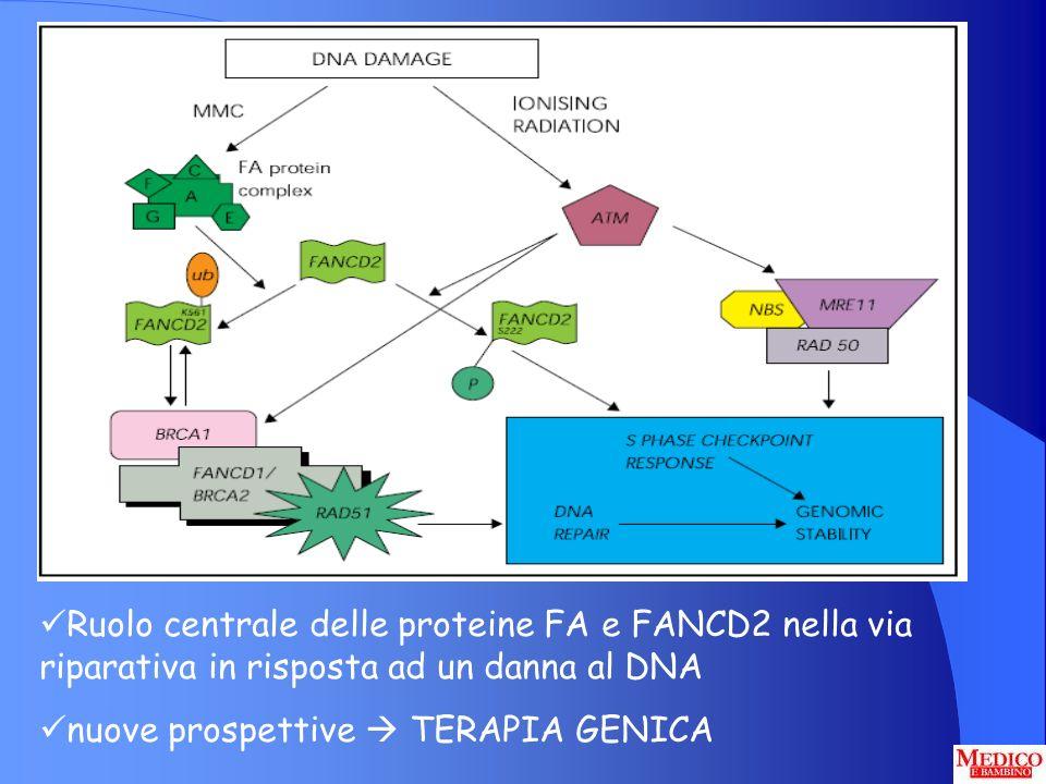 Ruolo centrale delle proteine FA e FANCD2 nella via riparativa in risposta ad un danna al DNA