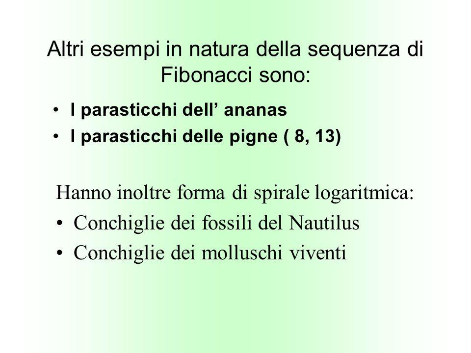Altri esempi in natura della sequenza di Fibonacci sono: