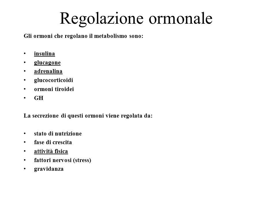 Regolazione ormonale Gli ormoni che regolano il metabolismo sono:
