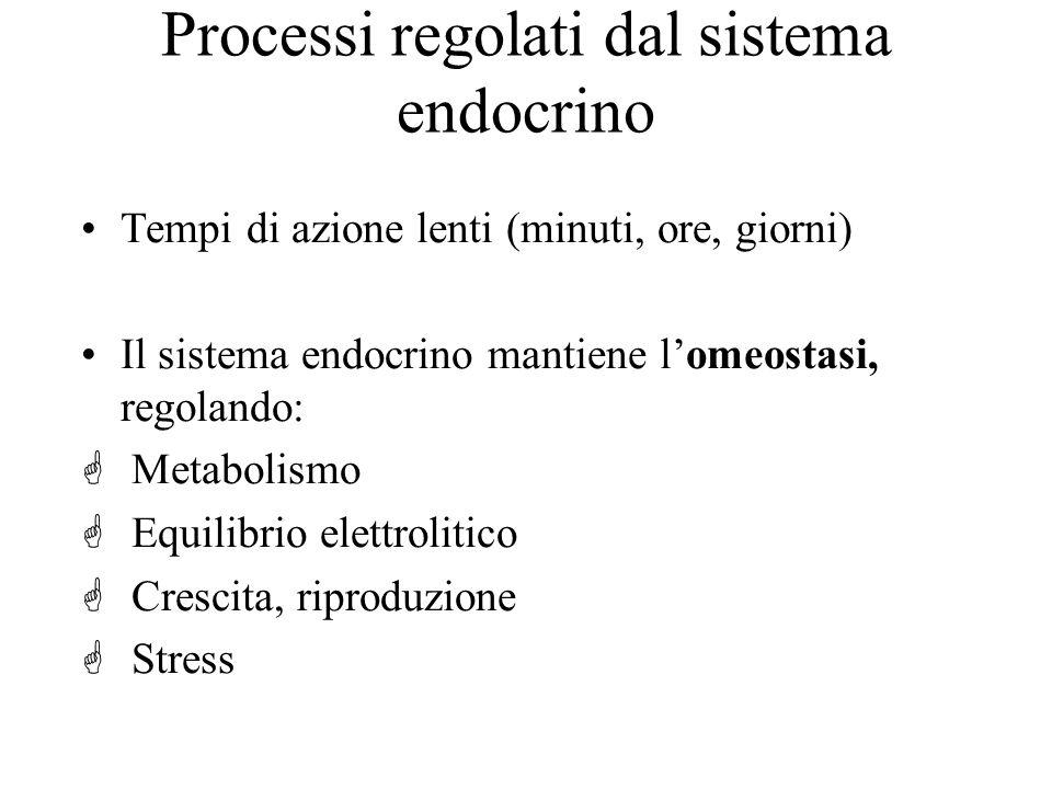 Processi regolati dal sistema endocrino