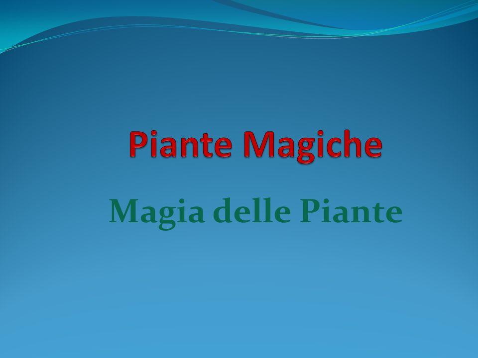 Piante Magiche Magia delle Piante