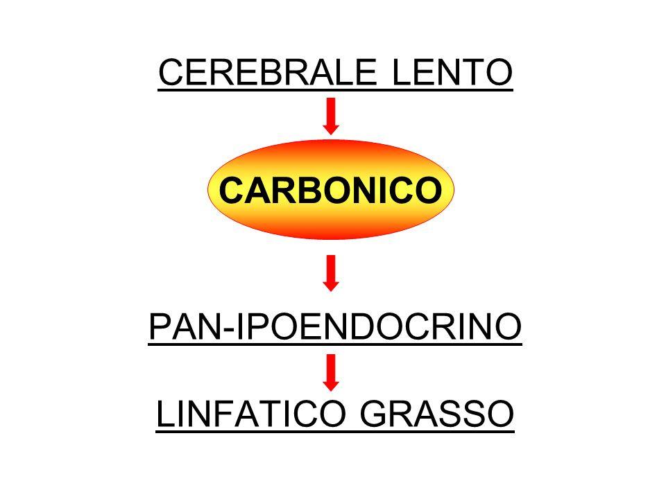 CEREBRALE LENTO PAN-IPOENDOCRINO LINFATICO GRASSO