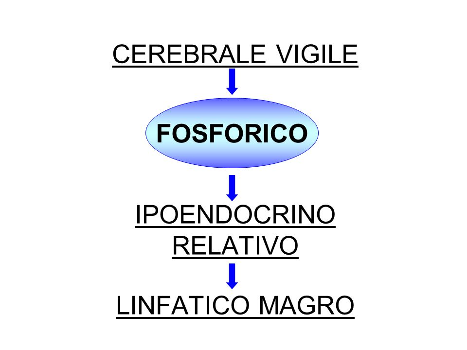 CEREBRALE VIGILE IPOENDOCRINO RELATIVO LINFATICO MAGRO