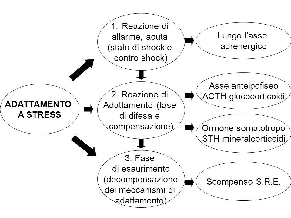 STH mineralcorticoidi