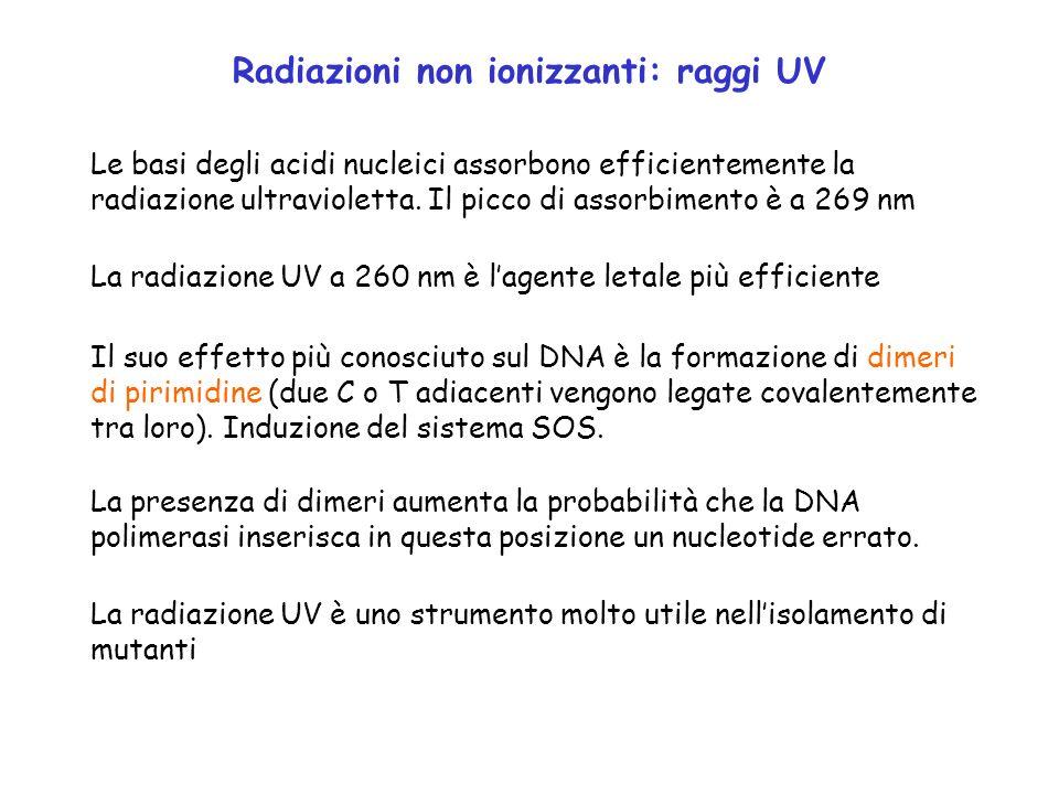 Radiazioni non ionizzanti: raggi UV