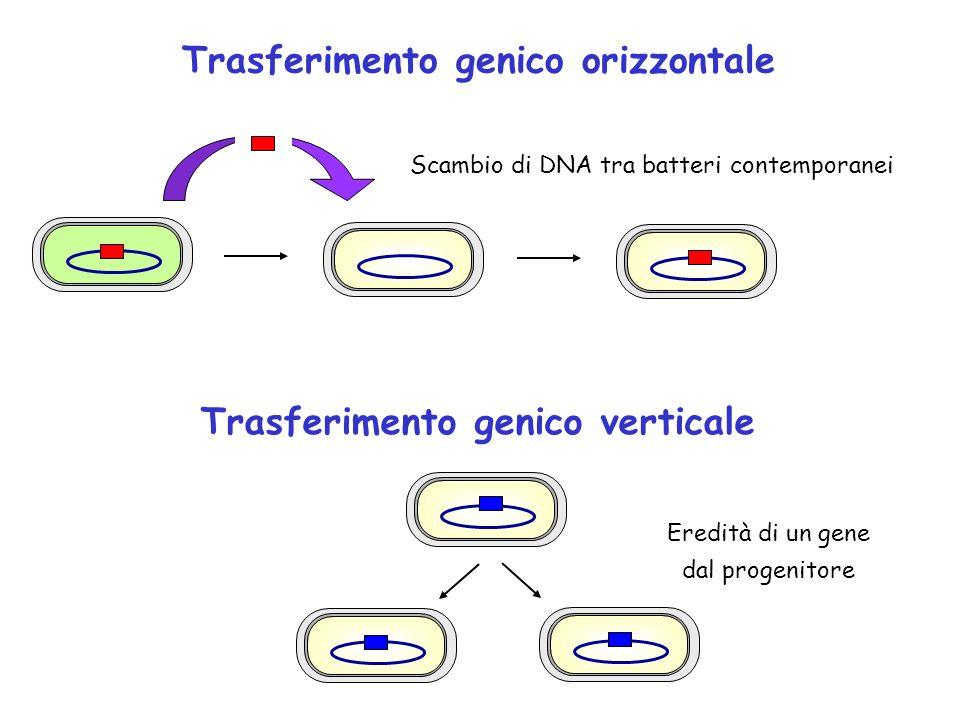 Trasferimento genico orizzontale