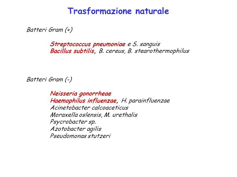 Trasformazione naturale