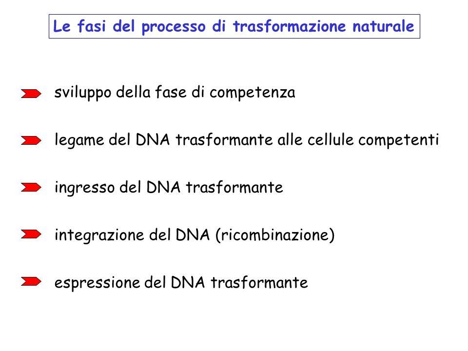 Le fasi del processo di trasformazione naturale