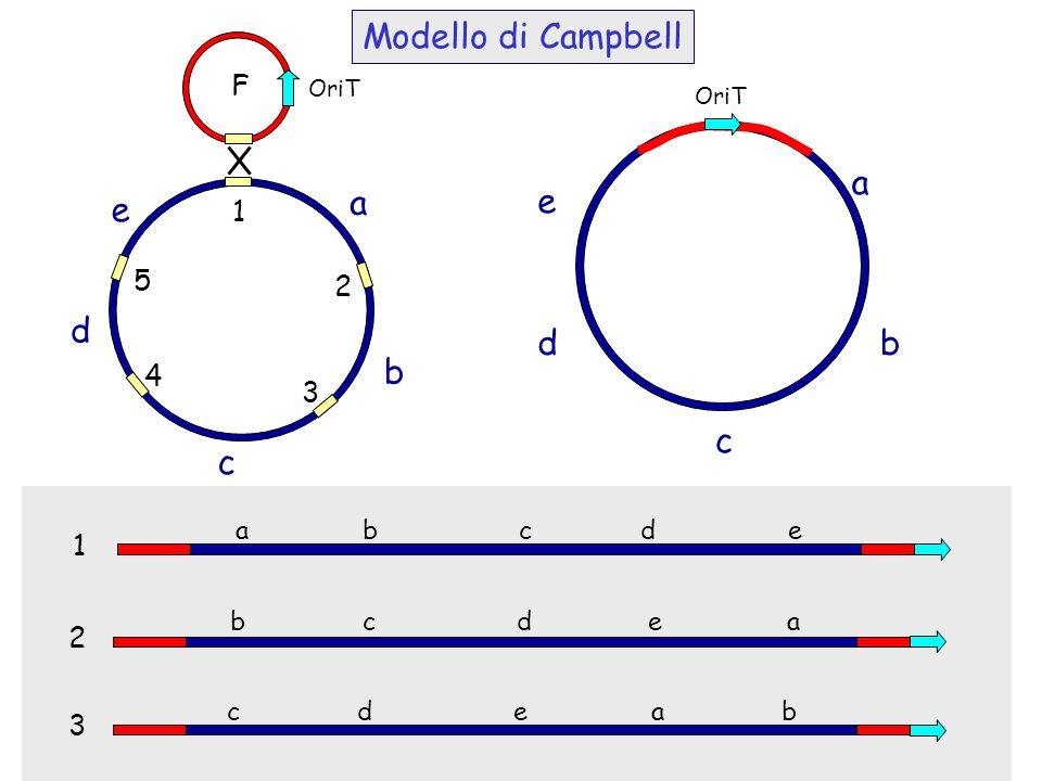Modello di Campbell a b c d e a b c d e F 1 5 2 4 3 1 2 3 a b c d e