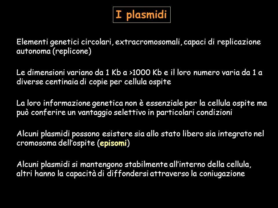 I plasmidi Elementi genetici circolari, extracromosomali, capaci di replicazione autonoma (replicone)
